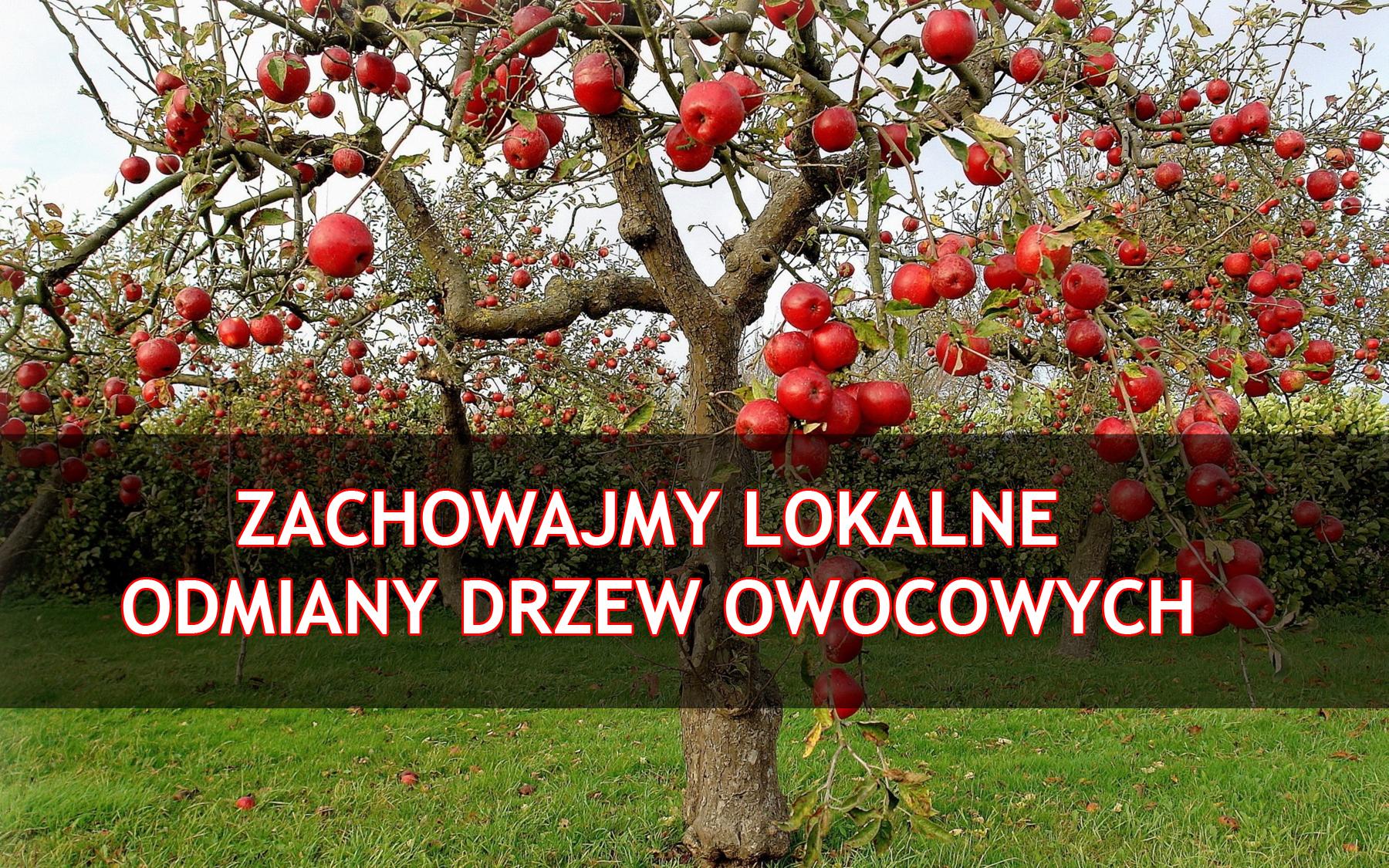 Zachowajmy lokalne odmiany drzew owocowych