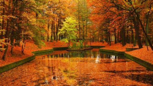 1-Jan Tołoko -mglista jesień w parku (2)